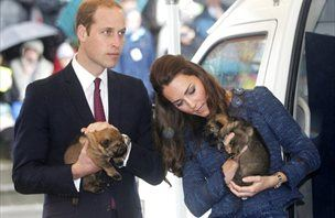Kate in William crkljala policijske kužke